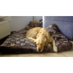 Hundebetten und Kissen