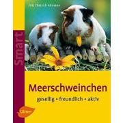 Meerschweinchen Gesellig - freundlich - aktiv