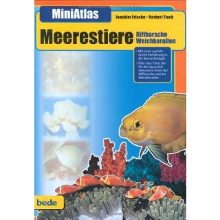 MiniAtlas, Meerestiere : Riffbarsche, Weichkorallen