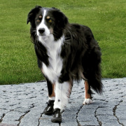 Trixie Pfotenschutz Walker Active XL