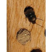 Schwegler Insektennistholz aus Hartholz